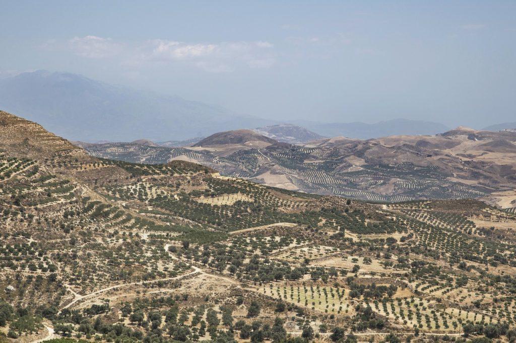 Olivenöl Plantagen Griechenland